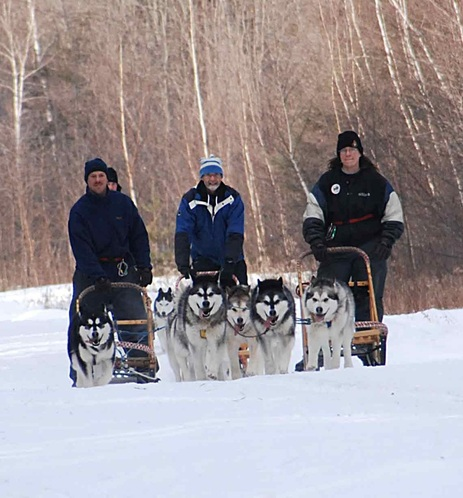 Tinker and three teams of Alaskan Malamutes sledding