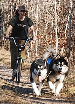 Alaskan Malamute Picture - two Alaskan Malamutes scootering - Ooky and Tinker