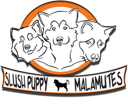 Registered Alaskan Malamute Puppies Breeder - Slushpuppy Logo!